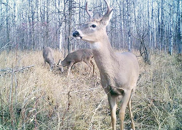 alberta hunting regulations 2017 pdf